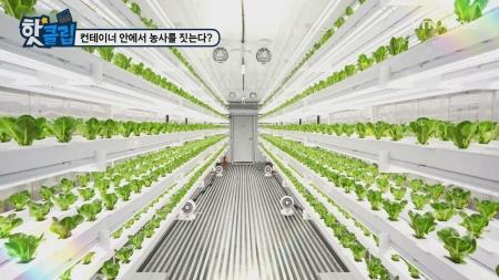 컨테이너 안에서 농사를 짓는다?
