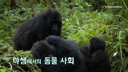 야생 동물 가족 생존기_2회 야생에서의 동물 사회