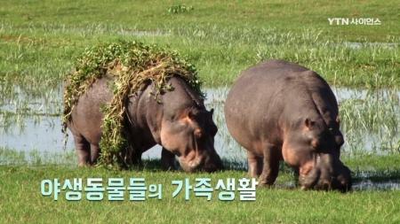 야생 동물 가족 생존기_4회 야생동물들의 가족생활