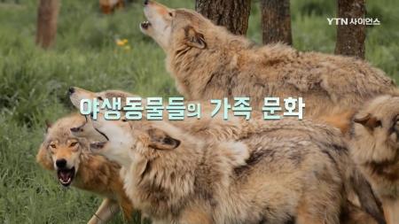 야생 동물 가족 생존기_6회 야생동물들의 가족 문화