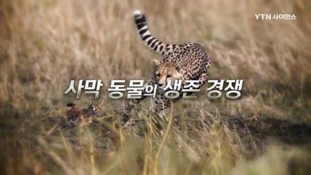 야생의 강자_14회 사막 동물의 생존 경쟁