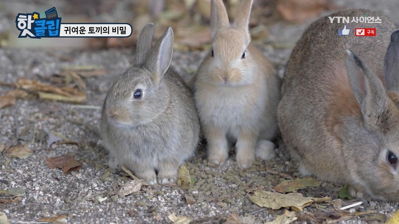 귀여운 토끼의 비밀
