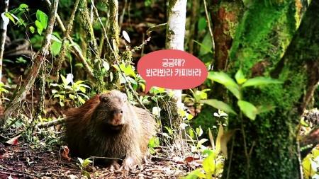 [시크릿 주주] 동물계의 인기스타, 카피바라의 모든 것!