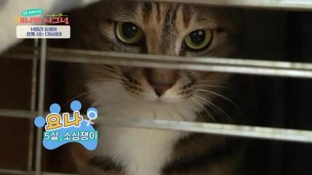 [애니멀 시그널] 24시간 좁은 틈에만! 따돌림당하는 고양이 요나