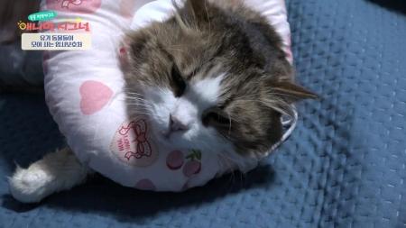 [펫닥터] 고양이에게 웬 혹?! 유기묘 뚱이를 괴롭히는 악성종양!