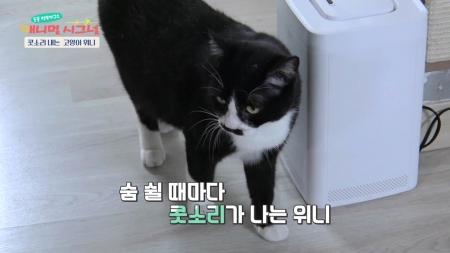 [펫닥터] 콧소리 내는 고양이 위니, 알고 보니 비강 염증?!