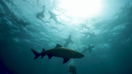 [시크릿 주주] 무시무시한 바다의 포식자, 상어의 시크릿!