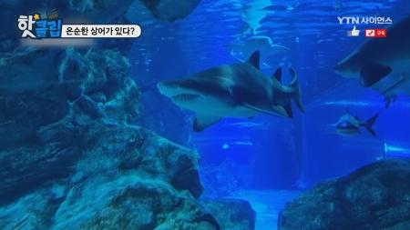 온순한 상어가 있다?