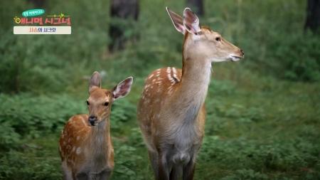 [시크릿 주주] 신성함의 상징, 사슴의 시크릿