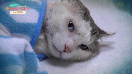 [펫닥터] 심한 피부 외상으로 고통받는 길고양이, 흰둥이