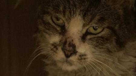 [펫닥터] 세균성 장염으로 고통받는 고양이, 소월이