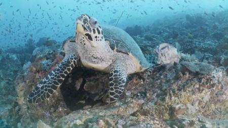 [시크릿 주주] 바다의 대표적인 장수 동물, 바다거북의 시크릿