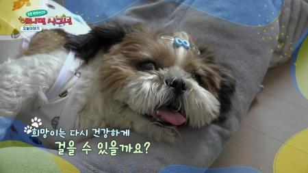 [펫닥터] 경추 디스크로 사지마비가 찾아온 강아지, 희망이