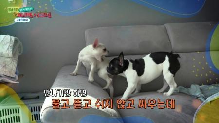 [애니멀 시그널] 호박&설기, 형제의 난