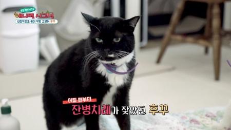 [펫닥터] 거대결장에 방광염까지 찾아온 고양이 '후꾸'